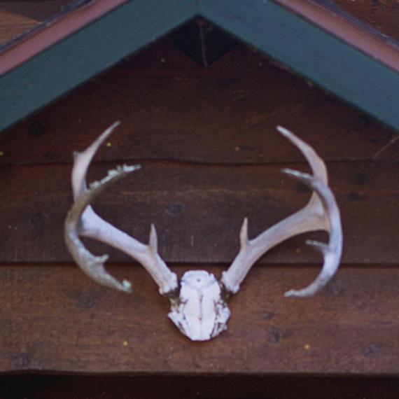 Collection Lodge : le chalet prêt-à-porter